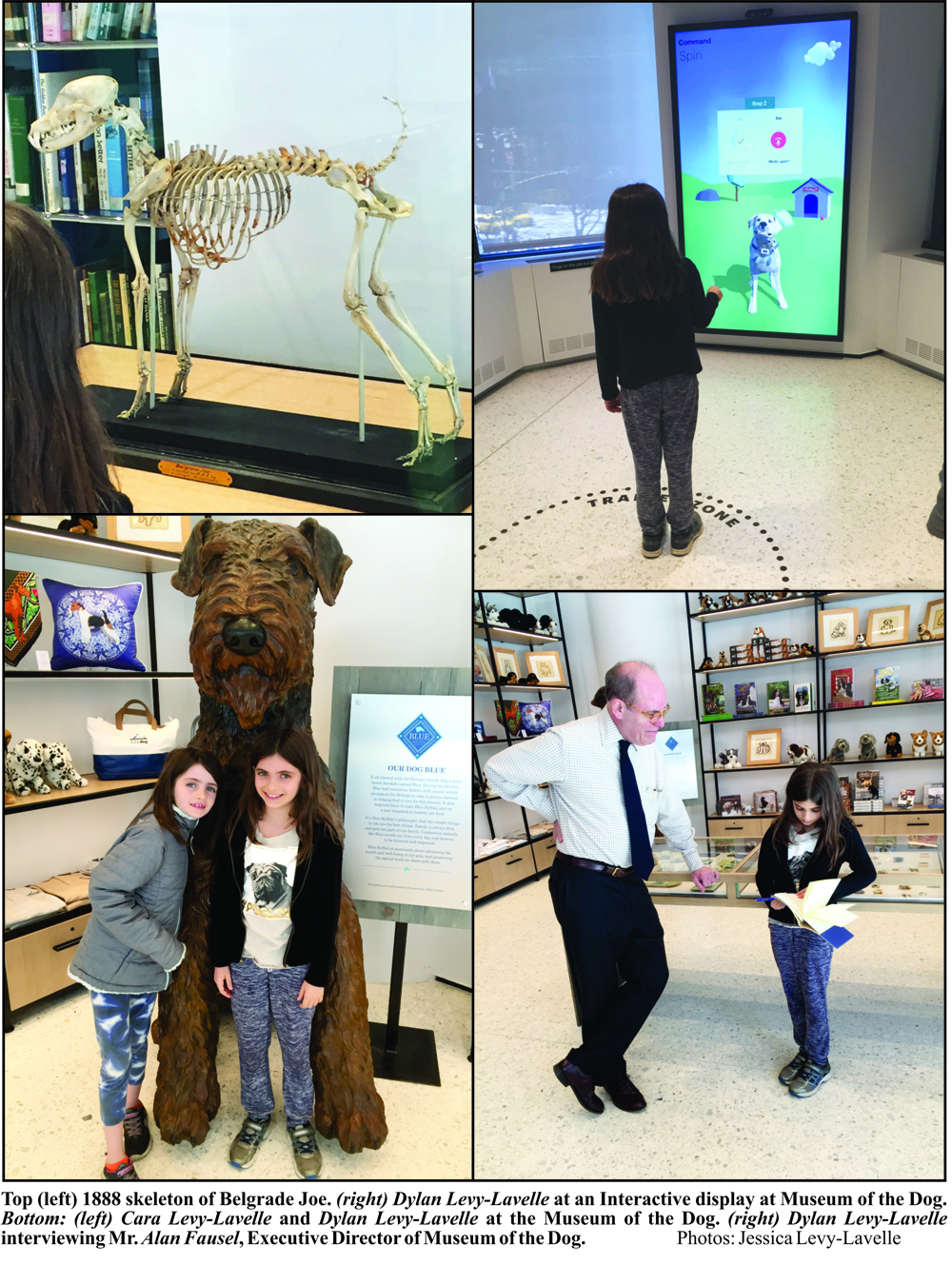 AKC-Museum-of-the-Dog-in-NYC